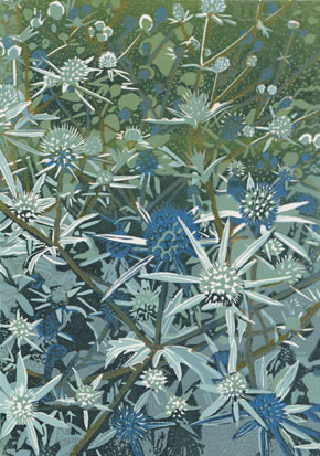 Sea Holly Blues